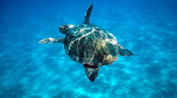 Δικαίωση για τις χελώνες σύμφωνα με απόφαση του Ευρωπαϊκού Δικαστηρίου